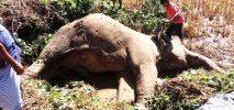 কক্সবাজারে বন্য হাতির রহস্যজনক মৃত্যু