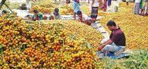 উখিয়া টেকনাফের উৎপাদিত সুপারি চাহিদা মিটিয়ে মধ্যপ্রাচ্যে রপ্তানি হচ্ছে