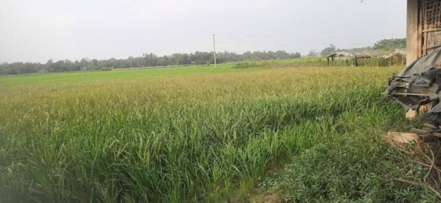 Chakaria-Picture-31-03-21-1.jpg