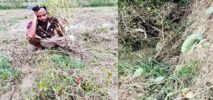 চকরিয়ায় ধান ও সবজি ক্ষেতে তাণ্ডব ফসলের ক্ষতিসাধন: আদালতে মামলা