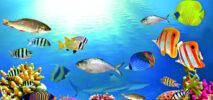 মৎস্য সপ্তাহ ২০২১ শুরু ; পবিত্র কোরআনে মাছ প্রসঙ্গ